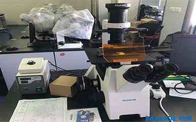 明美倒置荧光显微镜助力华中科技大学活细胞检测