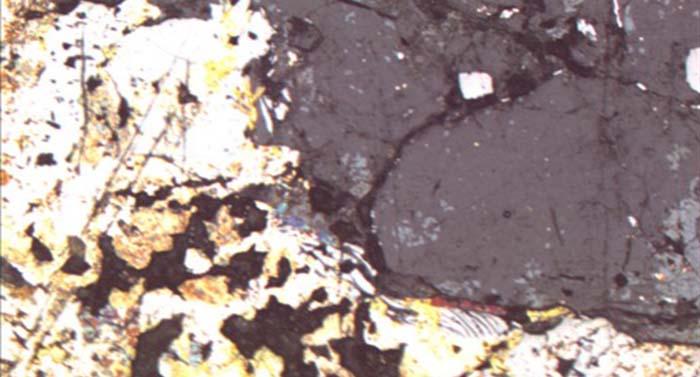 荧光显微镜 显微镜摄像头 显微镜接口MD90与奥林巴斯显微镜GX51的完美结合
