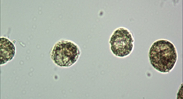 Mshot数码倒置生物显微镜在中山大学海洋学院投入使用