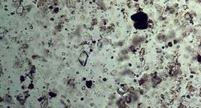 佛山东方澳龙制药公司成功采购数码生物显微镜