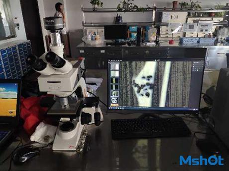 明美显微镜摄像头应用于金属材料成像