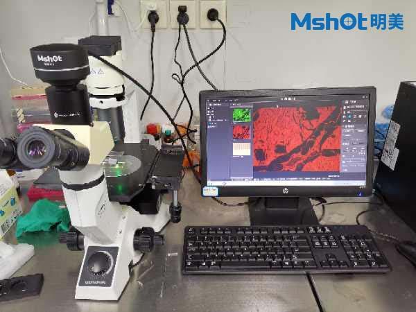 明美倒置荧光模块助力显微镜升级