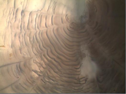湛江海洋大学采购显微数码成像系统在海洋生物领域的应用