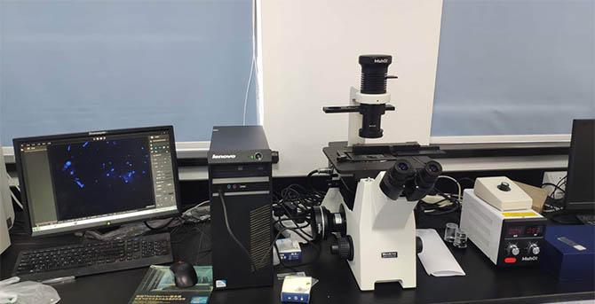 荧光显微镜在植物学领域内的相关应用