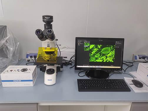显微镜下的结核杆菌长什么模样?