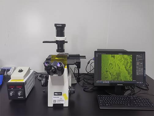 荧光显微镜用于制药企业研发