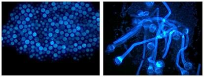用明美显微镜,守护舌尖下的世界