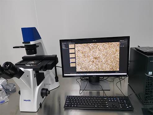 疫苗制备,倒置显微镜来助力