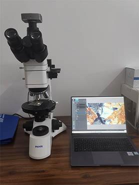 微观岩石 偏光显微镜下的美