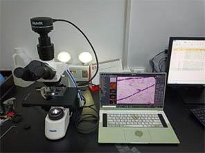微生物.jpg