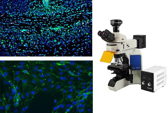 正置荧光显微镜.jpg
