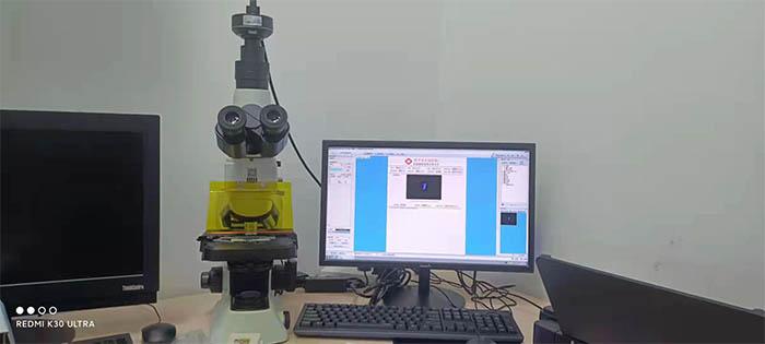显微镜下的世界——真菌镜检