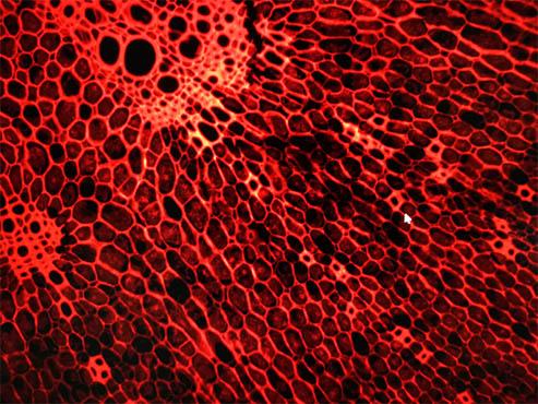 【安装日志】明美倒置荧光显微镜走进电子科技大学